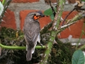 Flycatcher with Butterly copy