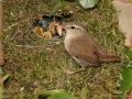 Wrens-nest-copy-2