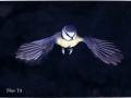 Bluebird copy